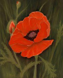 Red Poppy von Anastasiya Malakhova