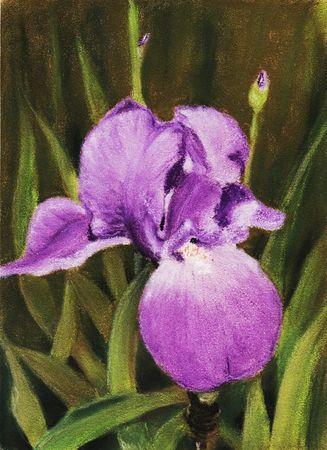 Single-iris-anastasiya-malakhova