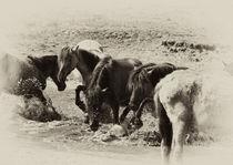 Wilde Pferde,  von Karin Dederichs
