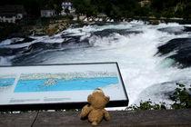 Kleiner Bär am Rheinfall von Olga Sander