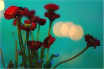 Gänseblümchen von lilithdavinci
