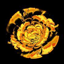 Yellow Flower von Anastasiya Malakhova