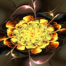 Yellow Water Lily by Anastasiya Malakhova