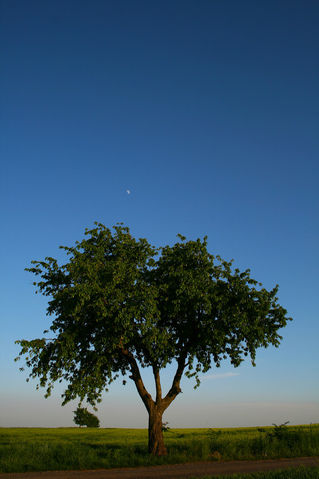 Moontree-cs4