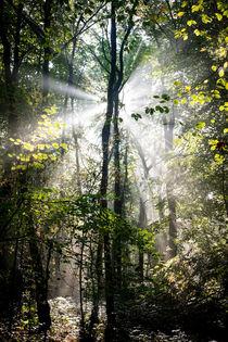 Sonnenstrahlen im (Zauber-)Wald I by Petra Dammann
