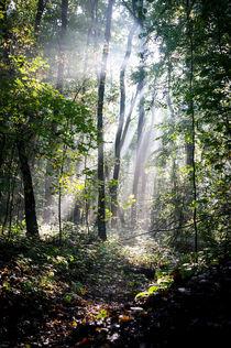 Sonnenstrahlen im (Zauber-)Wald II von Petra Dammann