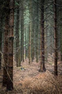 Nadelwald im Herbst von Petra Dammann