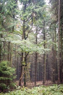 Jägerstuhl im Herbstlicht von Petra Dammann