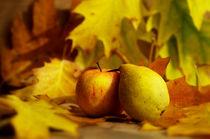 Jahreszeiten Poster der Herbst by Tanja Riedel