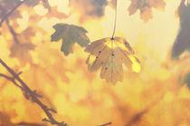 Goldener Herbst von Tanja Riedel