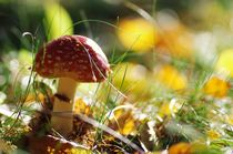 Im Zauber des Märchenwaldes by Tanja Riedel