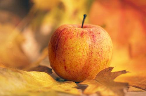 Apfel-herbst-bearbeitet-2
