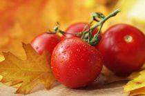 Reife Zeit für Tomaten von Tanja Riedel
