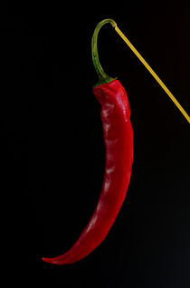 Chili Chill out by Tanja Riedel
