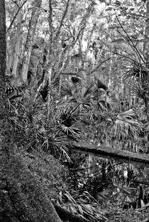 Black Water. Green Swamp Wildlife Management Area  Polk County, Florida.. von chris kusik