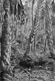 Forest Floor. Little Big Econ State Forest Seminole County, Florida. von chris kusik