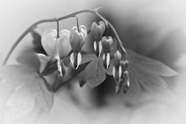 Blumen die weinen  von Barbara  Keichel