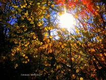 Rot und Gold im Sonnenlicht by Carmen Weßling