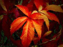 Gesichter des Herbstes_4 von Heidrun Carola Herrmann