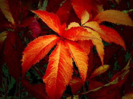 Herbstgesicht-1