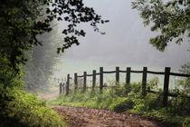 Forest path von © Ivonne Wentzler