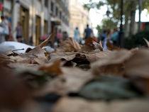 Autumn Leaves II von Imma Lucas