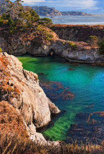 Point Lobos by Douglas Pulsipher