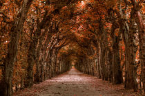 Herbstlich by foto-m-design
