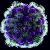 Beautiful World 3 - Virus - Blume