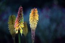 Rocket Flower by Erwin Lorenzen
