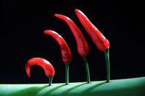 character chili by imran kadir