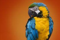 Papagei von Stephan Zaun