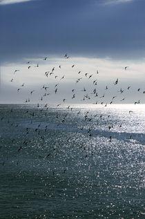 Vögel von Stephan Zaun