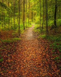 Path by Maciej Markiewicz