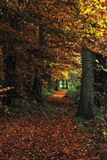 Herbstspaziergang von Horst Hoch