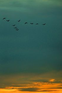 flocks against illuminated sky - Schwärme vor beleuchtetem Himmel by mateart