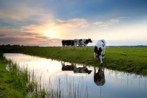 Summer farmland at sunset von Olha Rohulya