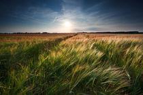 Summer field von Olha Rohulya