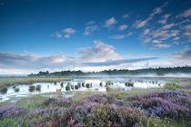 Silent swamp by Olha Rohulya