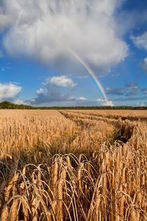 Rainbow over wheat field von Olha Rohulya