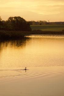 Morgens auf dem See von Sabine Radtke