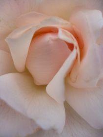Rose séduisante von Andrea Hensen