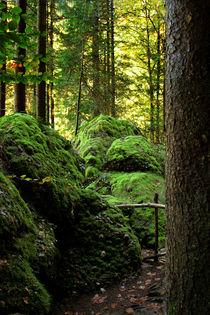 Im Märchenwald by pichris