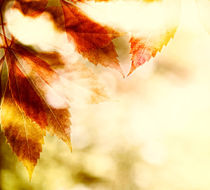 leaves background in Autumn color by Bombaert Patrick