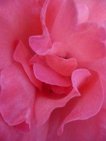 Retraite rose von Andrea Hensen