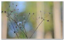 Waldtapete by lilithdavinci