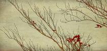 branches by Franziska Rullert