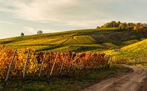 Goldener Herbst von Erhard Hess