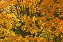 Autumn 03 von Tom Uhlenberg