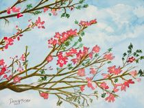 silk floss tree flowers by Derek McCrea